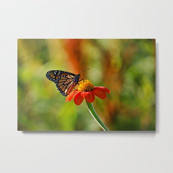 Monarch Butterfly #2 Metal Print