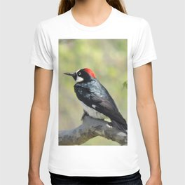 Acorn Woodpecker At Rest T-shirt