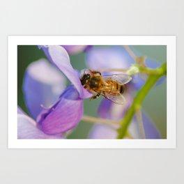 Mr. Bee Art Print