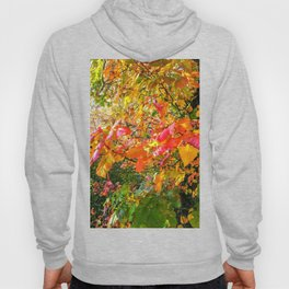 A Sunny Fall Afternoon Hoody