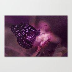 Soft Caress Canvas Print