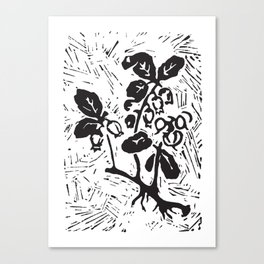 Wintergreen Canvas Print