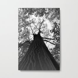 Forest black and white 17 Metal Print