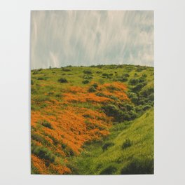 California Poppies 019 Poster