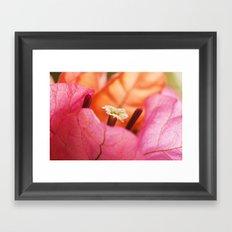 Beautiful Brazilian flower's Heart  91 Framed Art Print