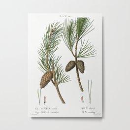 Virginia pine, Pinus inops and Shortleaf pine, Pinus variabilisfrom Traité des Arbres et Arbustes qu Metal Print