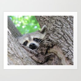 Curiousity From A Tree Art Print