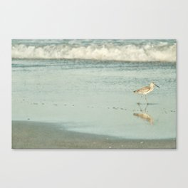 Exit Stage Right -- Willet Foraging Shallow Surf at the Beach Canvas Print