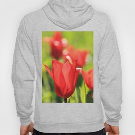 Red tulips in backlight 3 Hoody