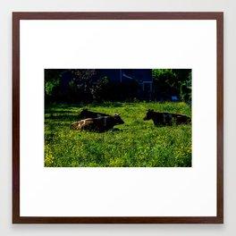 Chillin' Cows  Framed Art Print