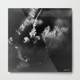 First Frost #2 Metal Print