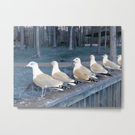"""Ducks"" in a row :) Metal Print"