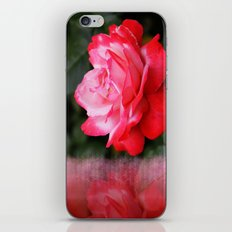 Letter from a Rose iPhone & iPod Skin