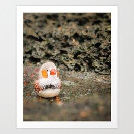 Finch sweetness Art Print