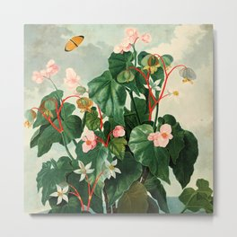 Pink Floral The Oblique-Leaved Begonias : Temple of Flora Metal Print