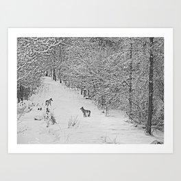Coyotes Art Decor. Art Print