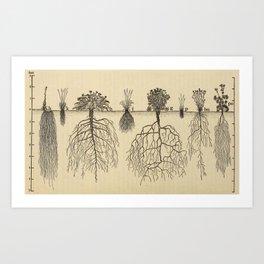 Botanical Roots Art Print