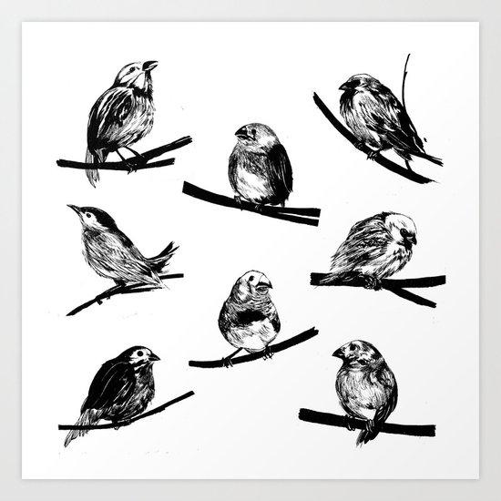Feathers by jonesray