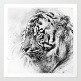 The mysterious eye of the tiger. WB. Square Art Print