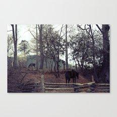 2 horses Canvas Print