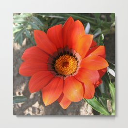 Close Up of a Beautiful Terracotta Gazania Flower Metal Print