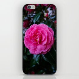 Comely Camellia iPhone Skin