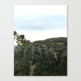 Juniper Canvas Print