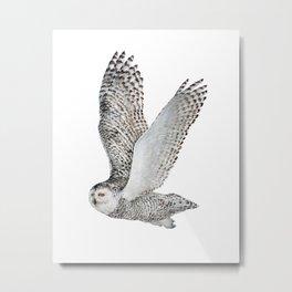 Snowy Owl in Flight 2  Metal Print