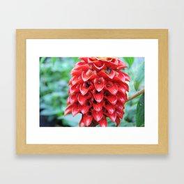Red Tropical Plant Framed Art Print