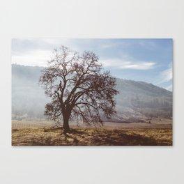 Solo Tree. Canvas Print