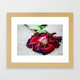 Wilted Rose Framed Art Print