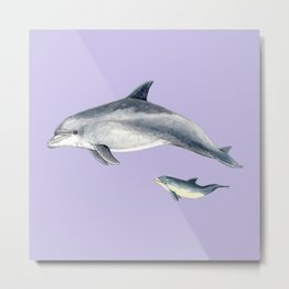 Bottlenose dolphin purple background Metal Print