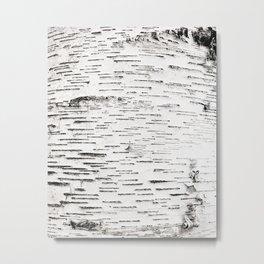 White Birch Metal Print