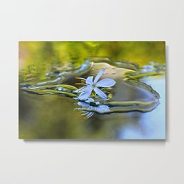 Innocence Tiny Flower of Spider plant Metal Print