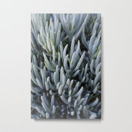 Succulents in Blue Metal Print