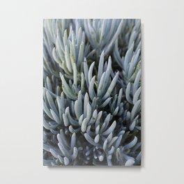 Succulents in Blue Metal Print