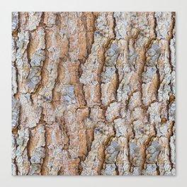 Pine bark textures Canvas Print