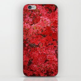 Charming Red Flower iPhone Skin