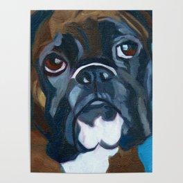 Boxer Lil E Dog Portrait Poster