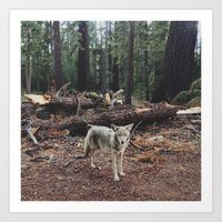 california Art Prints featuring Injured Coyote by Kevin Russ