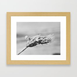 Black and White Macro Weed Framed Art Print