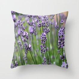 Lavender Plant Throw Pillow