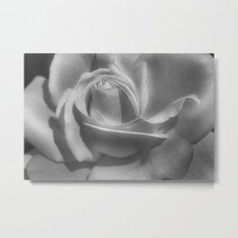 Rose velvet Roca Metal Print