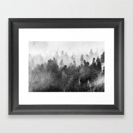 Forest Melody - Redwood National Park Framed Art Print