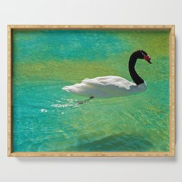 Amazing black-necked swan swiming in green pond Serving Tray
