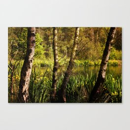 Hot summer day at the forest lake Canvas Print
