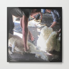 The Shearer - Through The Viewfinder - (TTV) Metal Print