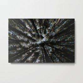 Woods in Australia, Bellingen – Dorrigo National Parc Metal Print