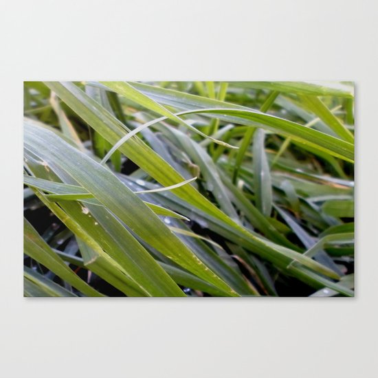 water and greenery Canvas Print