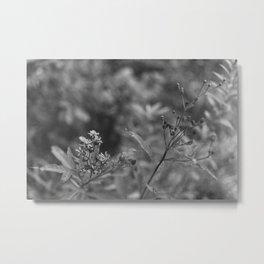 August Wildflowers III Metal Print